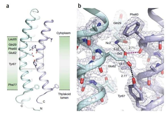 ATP synthase image1